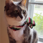 LOST – Female Cat – Elm Street Greensboro area