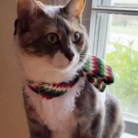 LOST – Female Cat – Elm Street Greensboro area