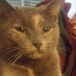 LOST – Gray Female Cate – Corinthian Way area